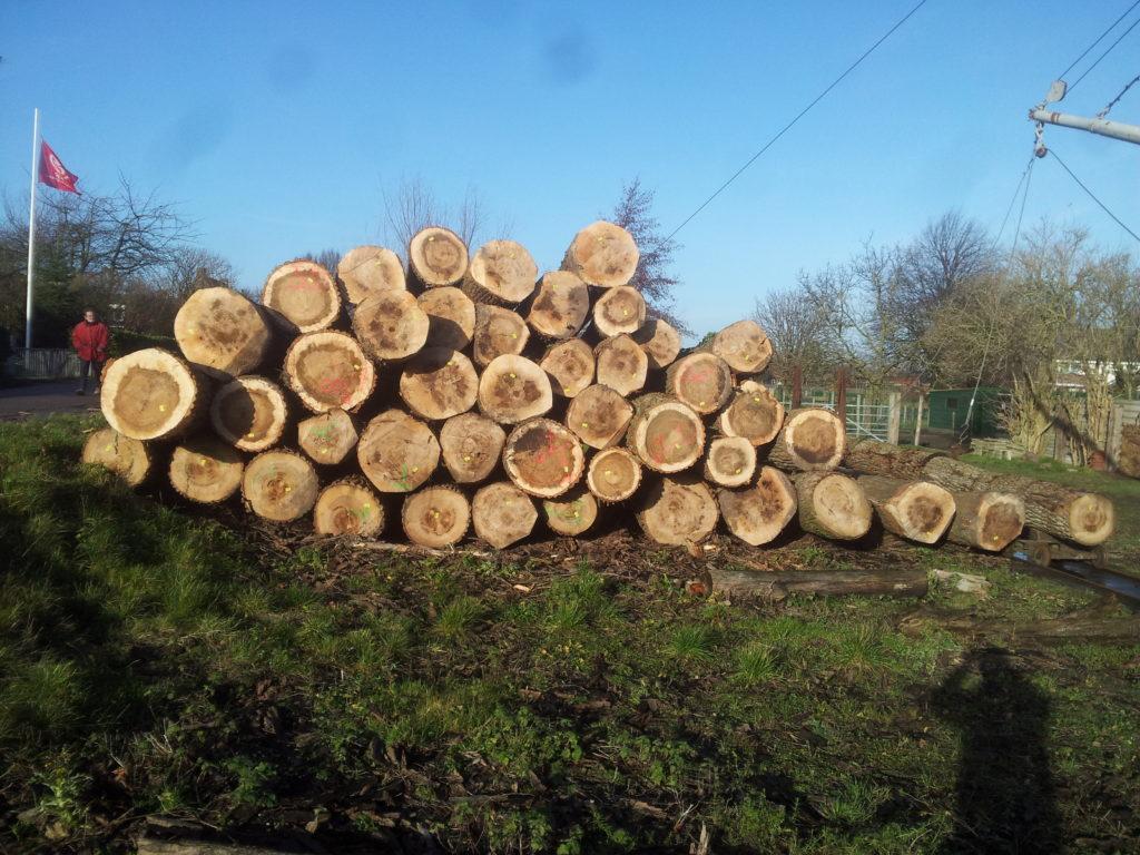 Bomen uit Zeeland waar de klompen van gemaakt worden. Een duurzaam product. Klompen kopen bij de klompenmaker.